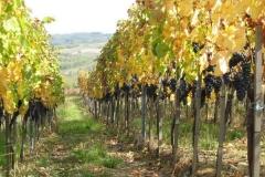 vinarija-milosavljevic-2