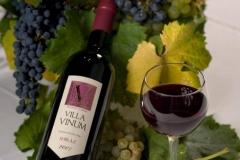 vinarija-milosavljevic-4