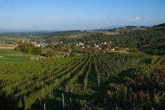vinarija-milosavljevic-6