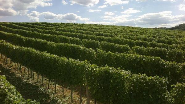 vinski put, vinarija, vinska riznica, riljac